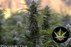 Pineapple Thai