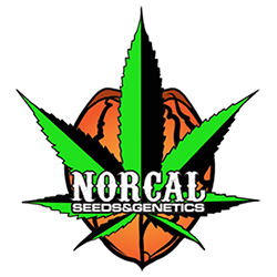 NorCal Seeds and Genetics